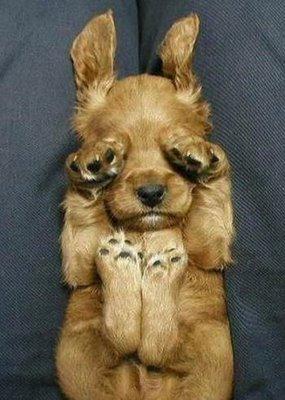 The-amusing-puppy.jpg