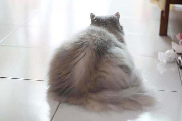 好圓的貓.jpg