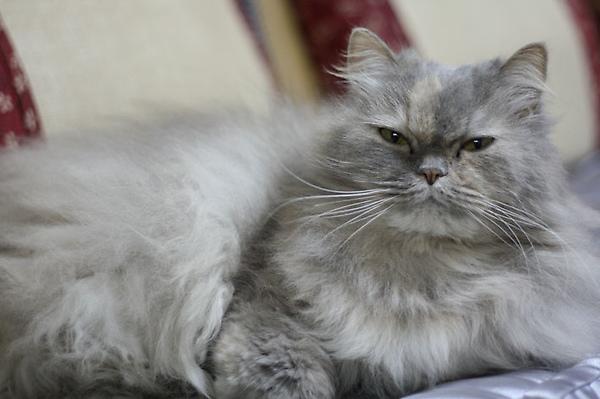 不受歡迎的貓籠-4.jpg