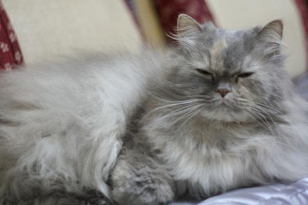 不受歡迎的貓籠-3.jpg