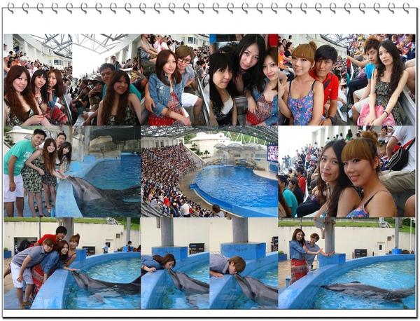 海豚秀-1.jpg