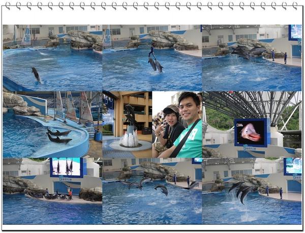 海豚秀.jpg