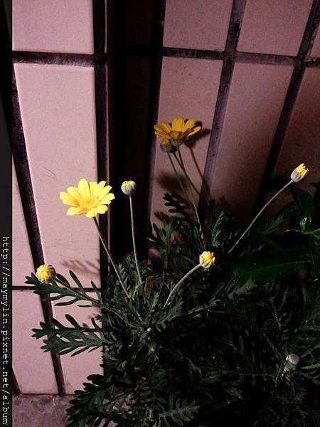 C360_2011-04-29 20-50-31.jpg