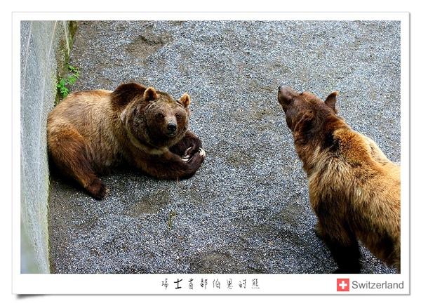 瑞士-首都伯恩代表的熊.jpg