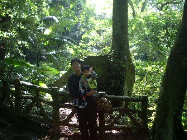 熱帶雨林中的小橋-1