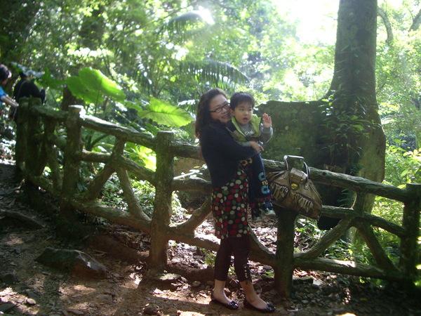 熱帶雨林中的小橋-2