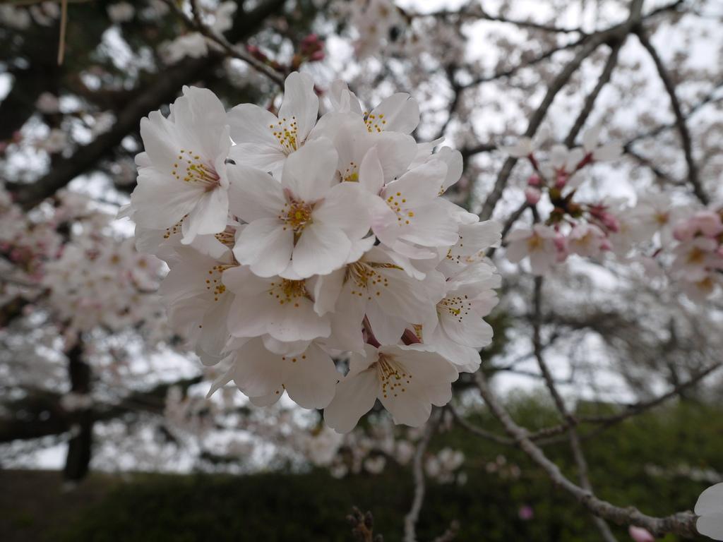 佐賀城06.JPG