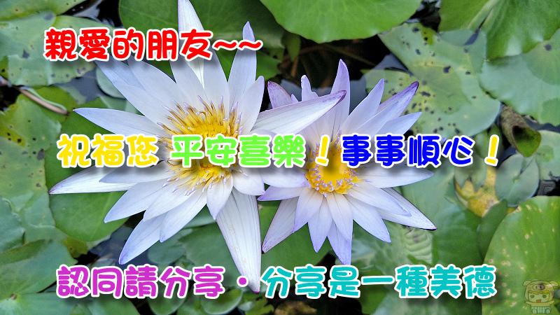 nEO_IMG_IMG201611141224191.jpg