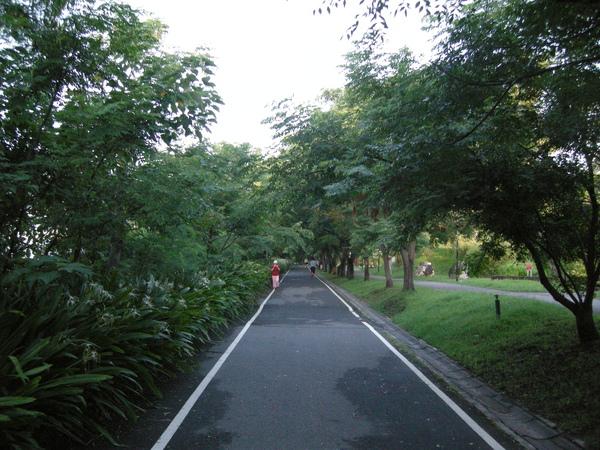 5單車綠色隧道.JPG