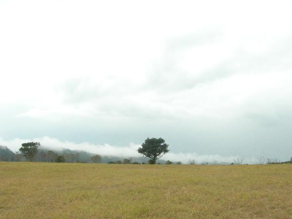 看來像一個孤樹