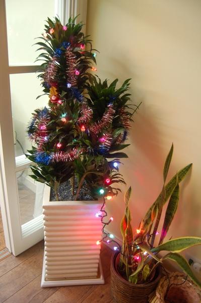 聖誕佈置2008.2 (2)small.JPG