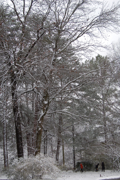 Snow  Birmingham (16).JPG