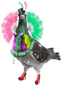 Camden Fringe pigeon_2012