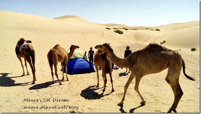 沙漠露營不速之客