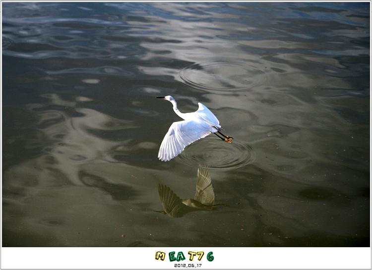 【HAVEFUN】碧湖公園|台北內湖 - 親福會我愛阿嬤101-06月聚21