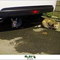 2012,08,31【寵物愛誌】AVALON底下的兩隻小野貓001