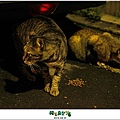 2012,08,31【寵物愛誌】AVALON底下的兩隻小野貓003