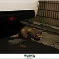 2012,08,31【寵物愛誌】AVALON底下的兩隻小野貓004