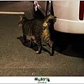 2012,08,31【寵物愛誌】AVALON底下的兩隻小野貓005