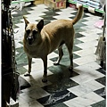 2012,09,15【寵物愛誌】烏龍狗生活|淚眼巴巴的目送我們離開,絕望得徹底。03