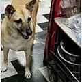 2012,09,15【寵物愛誌】烏龍狗生活|淚眼巴巴的目送我們離開,絕望得徹底。01