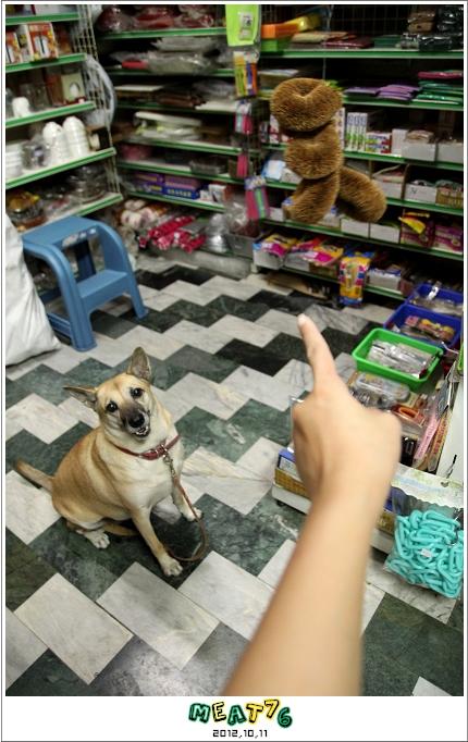 【寵物愛誌】烏龍狗生活2012,10,11|晃來晃去的鬃刷好朋友XD01