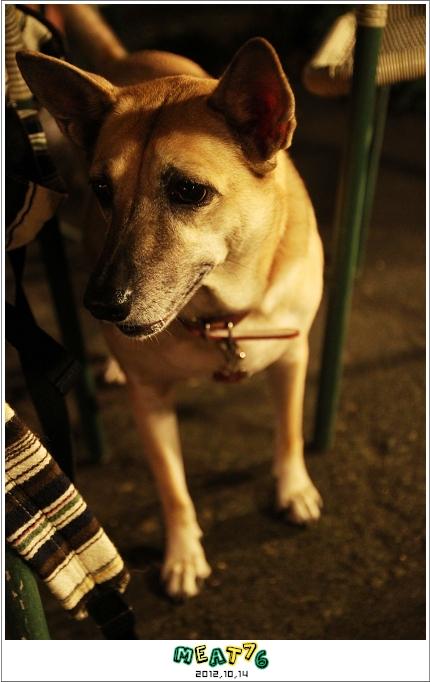 2012,10,14【烏龍狗生活】寵物愛誌|烏龍腰鬼小孩好久沒有一起去踏青04