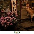 2012,10,14【烏龍狗生活】寵物愛誌|烏龍腰鬼小孩好久沒有一起去踏青07