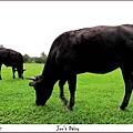 米特,味玩待敘 © MEAT|2011,10,29【遊記】台北陽明山擎天崗002