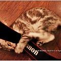 米特,味玩待敘 © MEAT76|2013【Miao|米亞歐 隨義小廚】台北內湖|義式輕食咖啡廳食記|貓控的秘密小天堂029