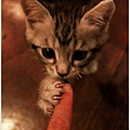 米特,味玩待敘 © MEAT76|2013【Miao|米亞歐 隨義小廚】台北內湖|義式輕食咖啡廳食記|貓控的秘密小天堂031