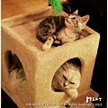 米特,味玩待敘 © MEAT76|2013【Miao|米亞歐 隨義小廚】台北內湖|義式輕食咖啡廳食記|貓控的秘密小天堂034