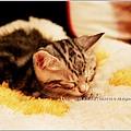米特,味玩待敘 © MEAT76|2013【Miao|米亞歐 隨義小廚】台北內湖|義式輕食咖啡廳食記|貓控的秘密小天堂036