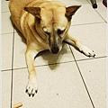米特,味玩待敘 © MEAT76|2013【狗狗零食】烏龍狗食記|開箱|羊肉雞肉起司火腿條019
