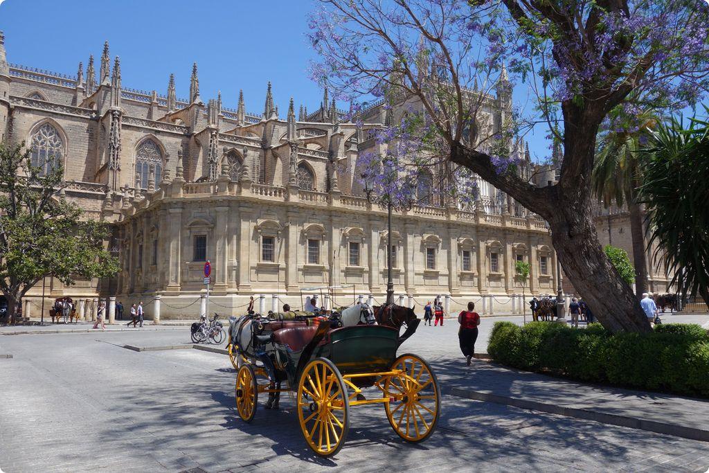 Jacaranda in Sevilla