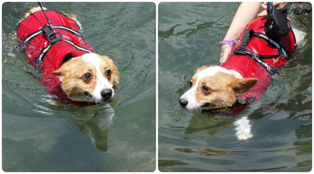 Swimming-05