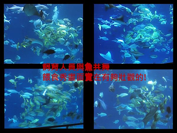 海生館飼育人員與魚共舞