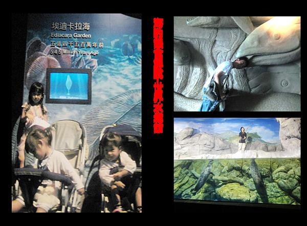 海生館海豹餵食解說-世界水域館