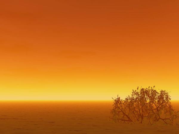 大地矮樹2.jpg