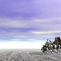 大地矮樹.jpg