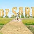 2012111322555083536.jpg