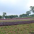 大溪花海農場(5)