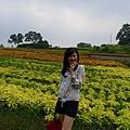 大溪花海農場(13)