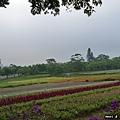 大溪花海農場(23)