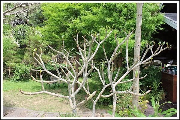 MeetinTaiwan-lunaforest 月光森林 雞蛋花 06.jpg