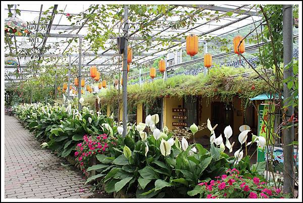 MeetinTaiwan - Tai Yi Ecological Leisure Farm 台一生態休閒農場009.jpg