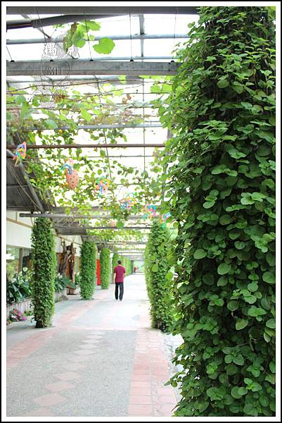MeetinTaiwan - Tai Yi Ecological Leisure Farm 台一生態休閒農場011.jpg