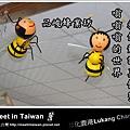 蜜蜂bee.jpg