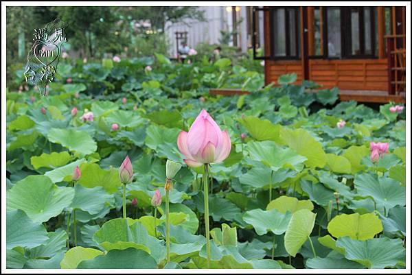 MeetinTaiwan - Paper Dome 南投紙教堂023.jpg