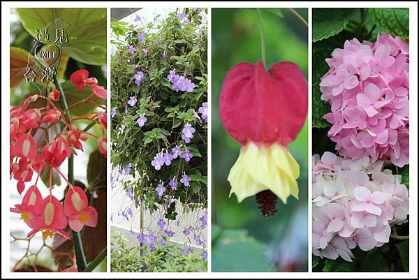 MeetinTaiwan - TenWay Garden 菁芳園09.jpg